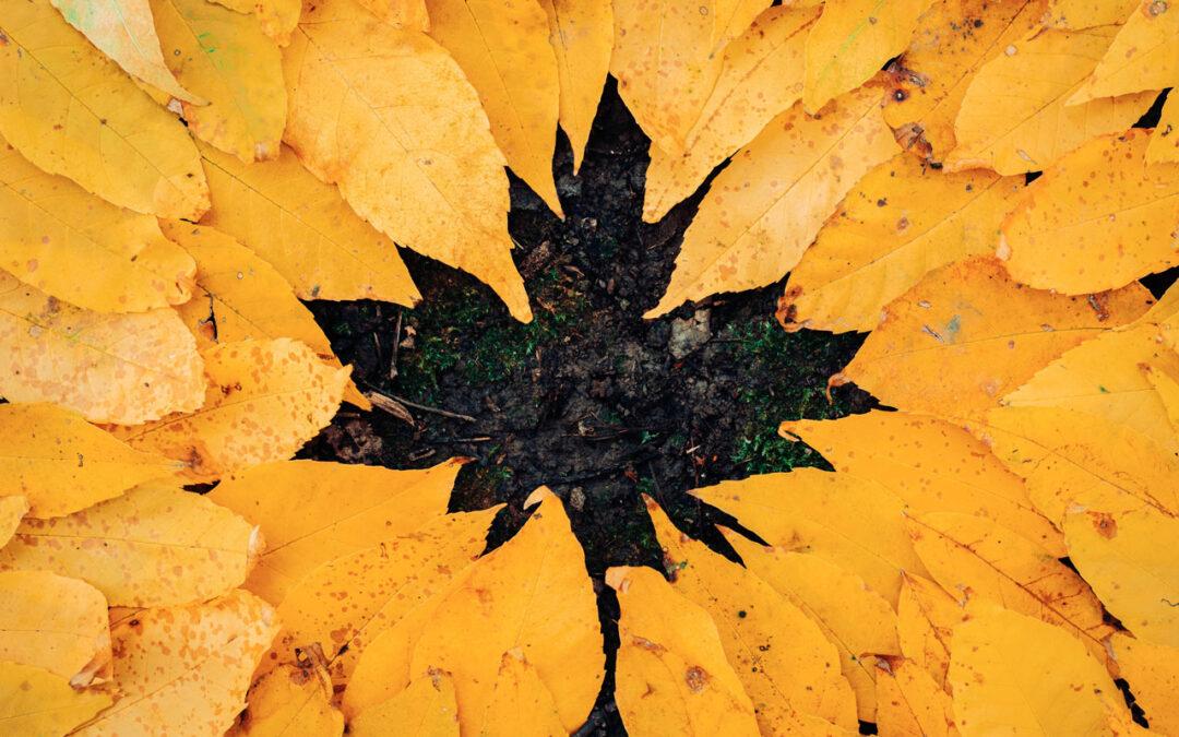 Beginner Tips for Autumn Photography